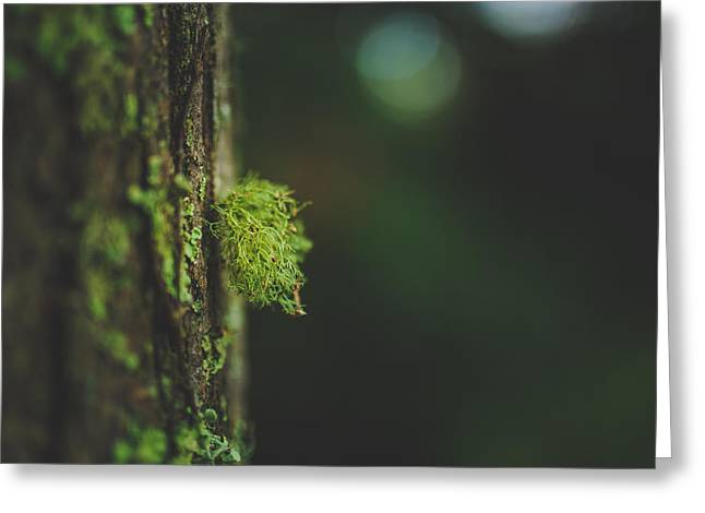 Moss Greeting Cards - Little Something On Your Trunk Greeting Card by Shane Holsclaw
