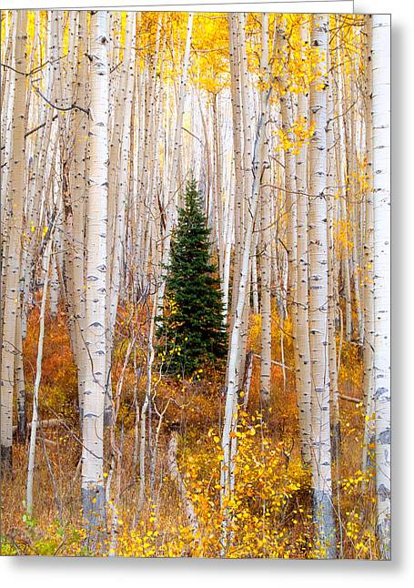 Colorado Greeting Cards - Little Tree Greeting Card by Tim Reaves