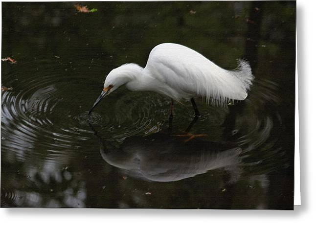 Little Critters Greeting Cards - Little White Egret in Pastel Greeting Card by Suzanne Gaff