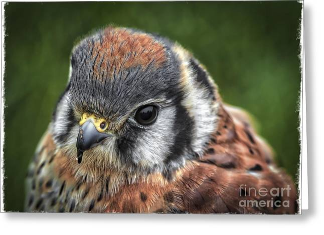 Hunting Bird Greeting Cards - Little Wing Greeting Card by Mitch Shindelbower
