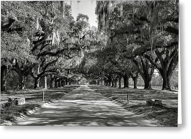 Agriculture Framed Prints Greeting Cards - Live Oak Avenue II Greeting Card by Steven Ainsworth