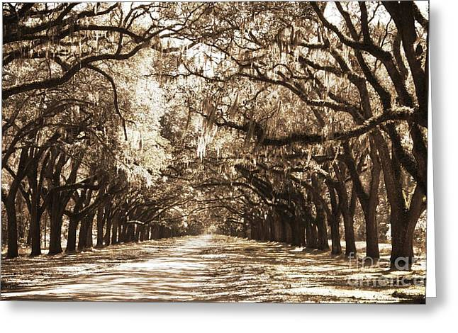 Live Oak Lane In Sepia Greeting Card by Carol Groenen