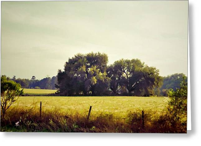 Live Oak Oasis Greeting Card by Jan Amiss Photography