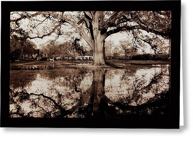 Reflection In Water Pyrography Greeting Cards - Live Oak Reflections Greeting Card by Danny Wiggins