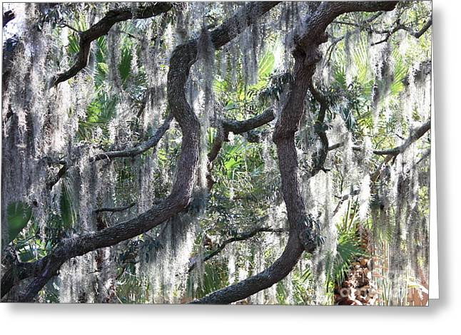 Carol Groenen Greeting Cards - Live Oak with Spanish Moss and Palms Greeting Card by Carol Groenen