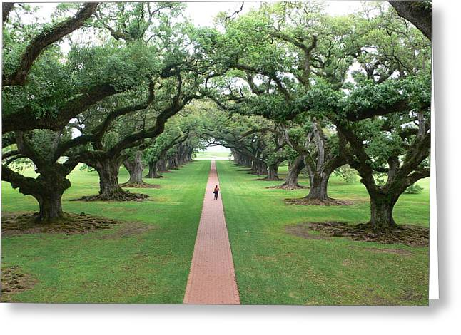 Large Scale Greeting Cards - Live Oaks Greeting Card by Francine Gourguechon