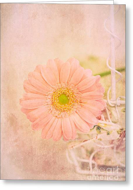 Border Greeting Cards - Living at home Greeting Card by SK Pfphotography