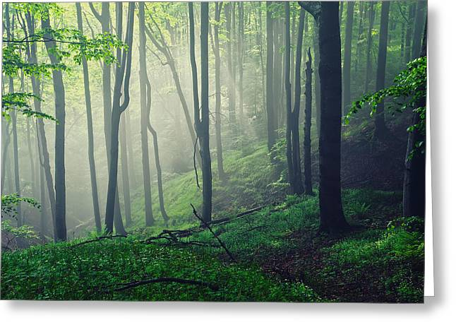 Mist Photographs Greeting Cards - Living Forest Greeting Card by Evgeni Dinev