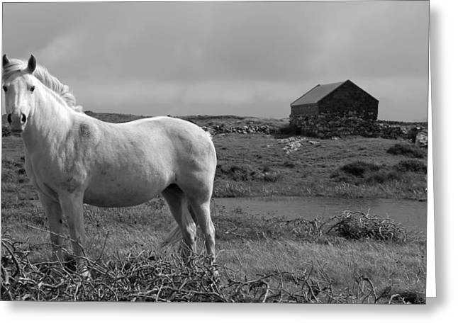 Stonewall Greeting Cards - Living Free In Ireland Greeting Card by H Bierser