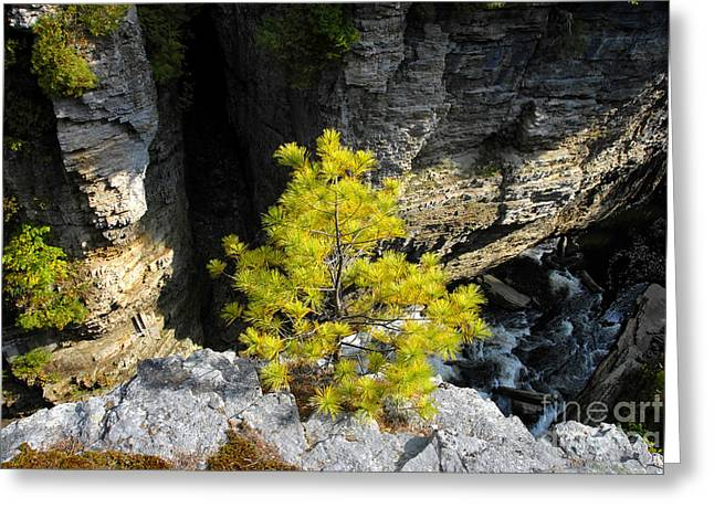 Living On The Edge Greeting Card by David Lee Thompson