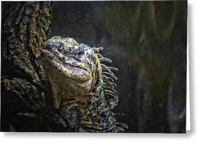 Lens Mixed Media Greeting Cards - Lizard Hey Bring That Lens Over Here Greeting Card by Thomas Woolworth