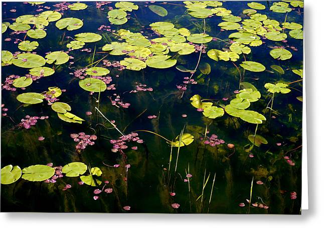 Llangors Lilies Greeting Card by Susan Fernandez