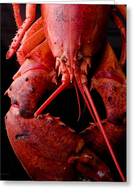 Lobster Greeting Card by Jim DeLillo