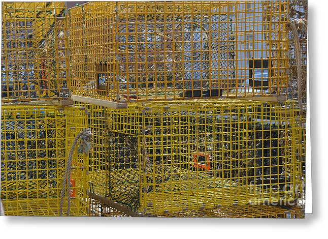 Lobster Pot Greeting Cards - Lobster Pots Greeting Card by Jason Freedman