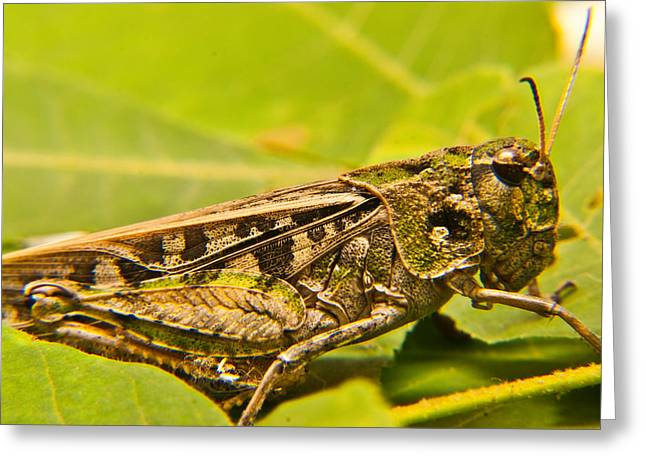 Locust Greeting Cards - Locust in Green Greeting Card by Douglas Barnett