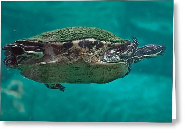 Loggerhead Plastron Greeting Card by DigiArt Diaries by Vicky B Fuller