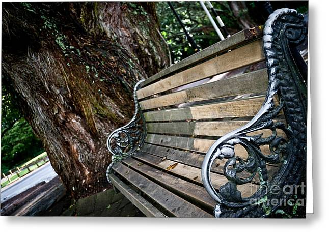 Sardinelly Greeting Cards - Lone bench in the park Greeting Card by Yurix Sardinelly