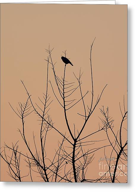Recently Sold -  - Peaceful Scenery Greeting Cards - Contemplation Greeting Card by Jeanette Fiveash