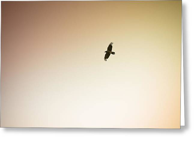 (c) 2010 Photographs Greeting Cards - Lone Bird Greeting Card by Ryan Kelly