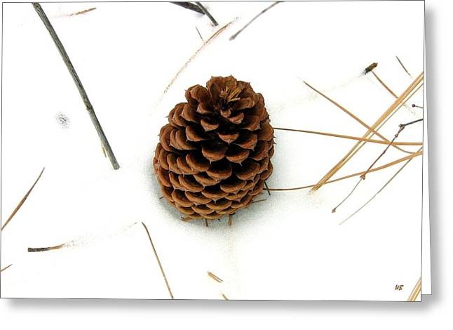 Pine Needles Greeting Cards - Lone Cone Greeting Card by Will Borden