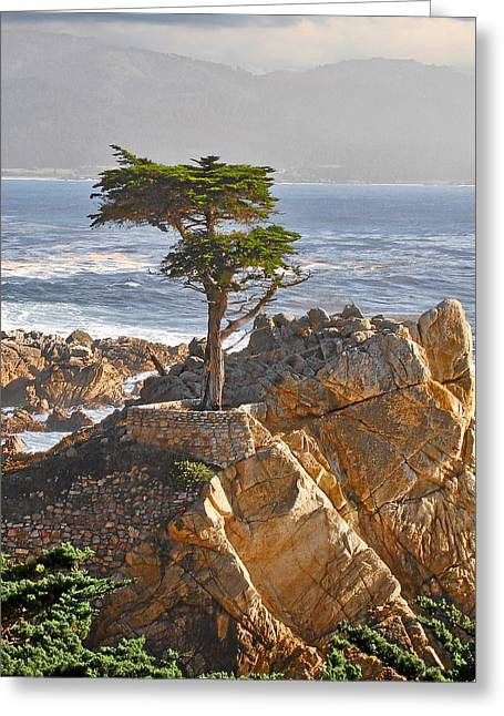 Misty Greeting Cards - Lone Cypress - The icon of Pebble Beach California Greeting Card by Christine Till