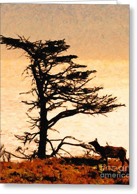 Tule Elks Greeting Cards - Lone Elk of Tomales Bay - Photoart Greeting Card by Wingsdomain Art and Photography
