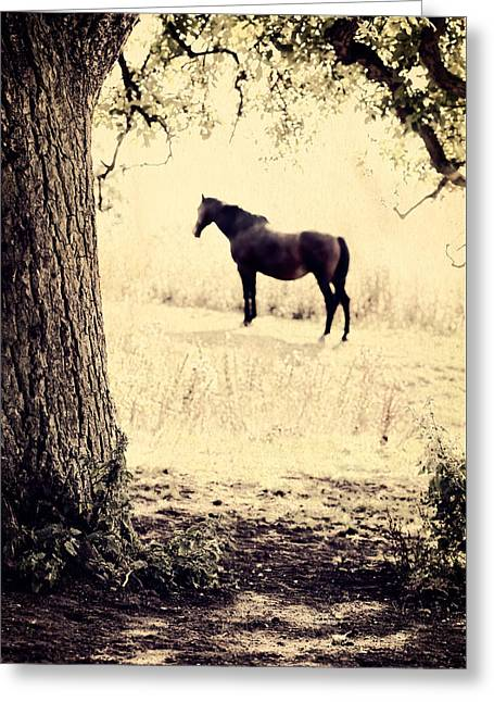 Lone Horse Greeting Cards - Lone Horse Framed By A Tree Greeting Card by Paul Bucknall