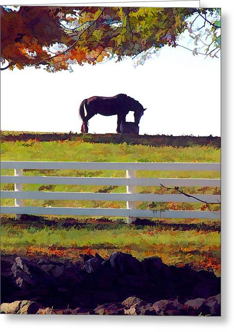 Equine Solitude Greeting Card by Sam Davis Johnson