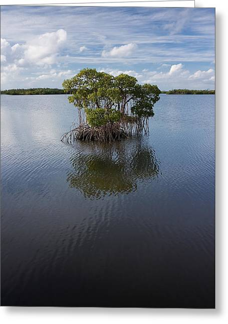 Nature Center Greeting Cards - Lone Mangrove Greeting Card by Robert Grauer