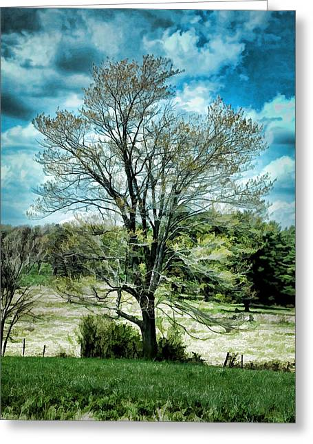 Lone Maple Greeting Card by Karl Fritz