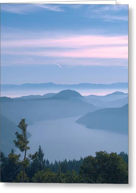 Bc Inside Passage Greeting Cards - Lone Pine Greeting Card by James Johnstone