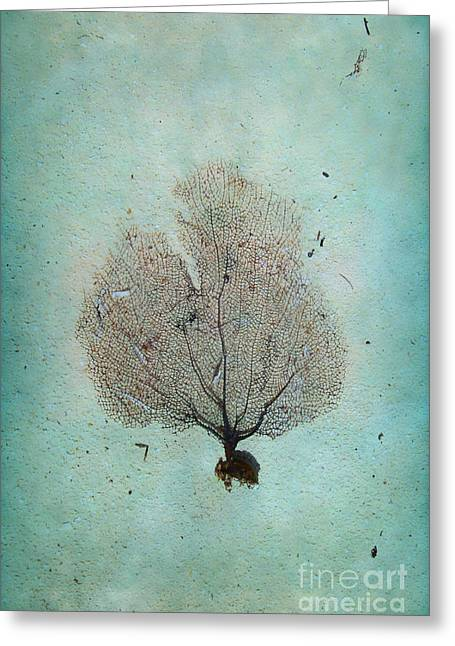Sea Fan Greeting Cards - Lone Sea Fan Greeting Card by Margie Hurwich