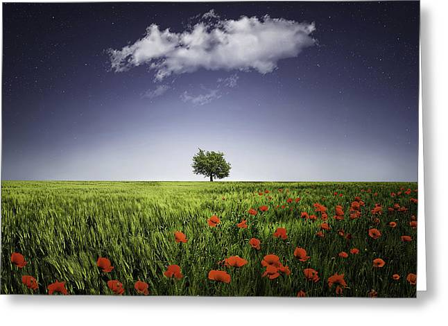 Season. Sky. Clouds Greeting Cards - Lone tree a poppies field Greeting Card by Bess Hamiti