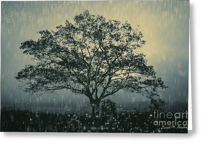 Lone Tree And Stormy Evening Greeting Card by David Gordon