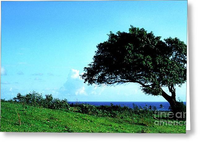 Puerto Rico Greeting Cards - Lone Tree Blue Sea Greeting Card by Thomas R Fletcher