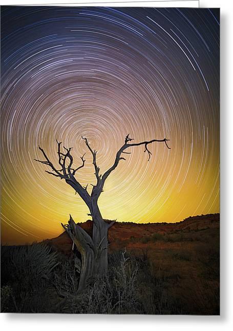 Lone Tree Greeting Card by Edgars Erglis