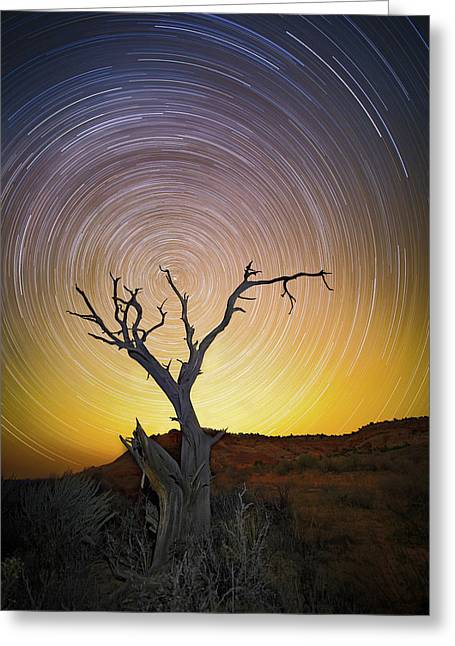 Lone Tree Greeting Card by Edgars Erglis