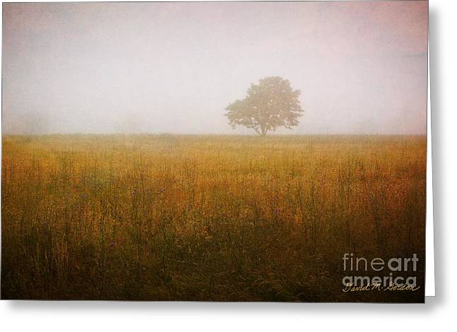 Lone Tree In Meadow No. 2 Greeting Card by Dave Gordon