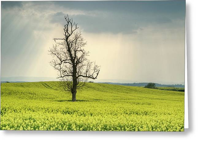 Hopelessness Greeting Cards - Lone Tree in Rape Field 2 Greeting Card by Douglas Barnett