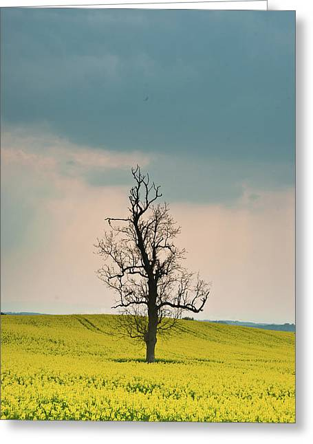 Hopelessness Greeting Cards - Lone Tree in Rape Field 3 Greeting Card by Douglas Barnett