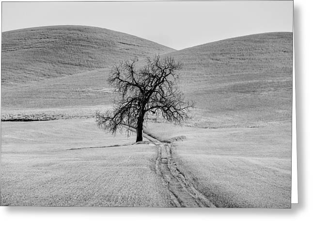 Lone Tree In The Palouse Greeting Card by Jon Glaser