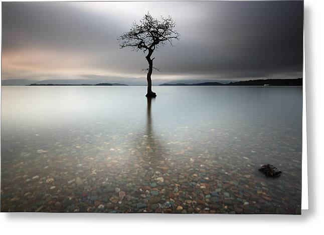 Scenic Greeting Cards - Lone Tree Loch Lomond Greeting Card by Grant Glendinning