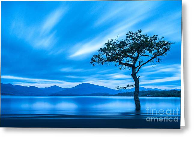 Lone Tree Milarrochy Bay Greeting Card by Janet Burdon
