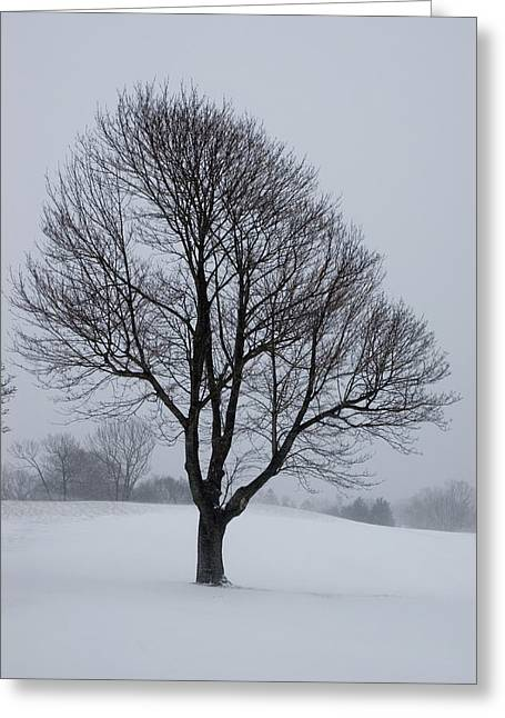 Groton Greeting Cards - Lone Tree On A Golf Course Covered Greeting Card by Todd Gipstein