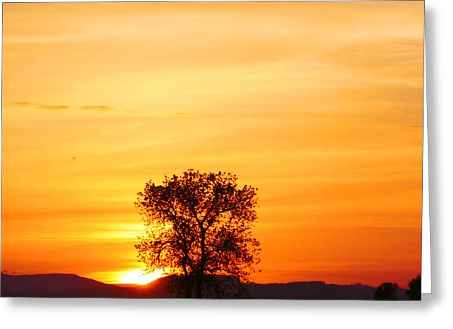 Lone Tree Sunset Greeting Card by Nick Gustafson
