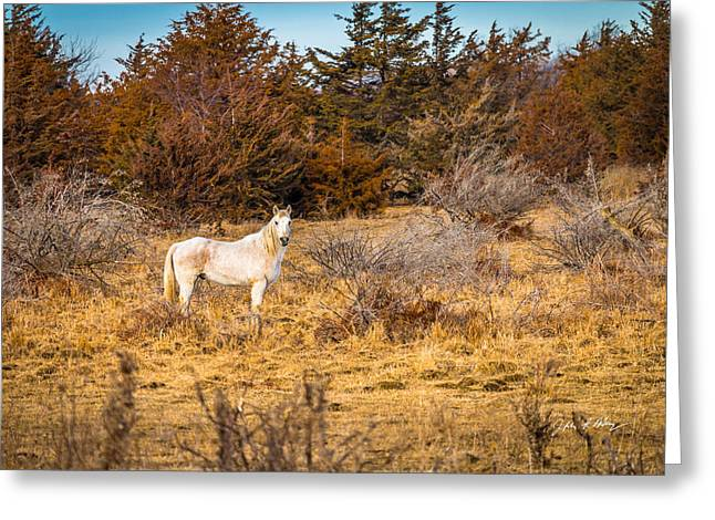 Lone Horse Greeting Cards - Lone White Horse Greeting Card by Jeffrey Henry