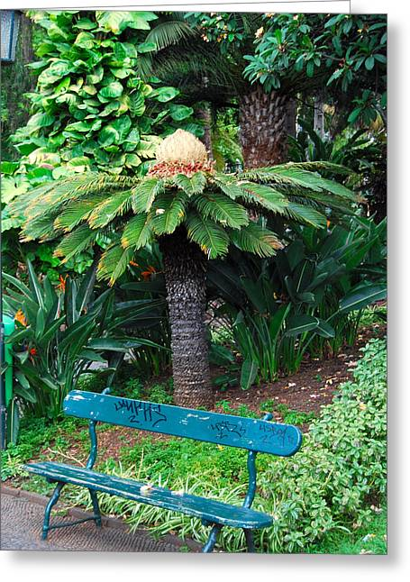 Solitariness Greeting Cards - Lonely Bench Greeting Card by Franc  Bele
