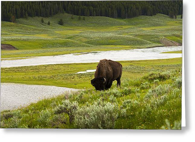 Lonely Bison Valley Greeting Card by Chad Davis