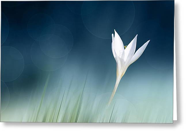 Crocus Flower Greeting Cards - Lonely Greeting Card by Doris Reindl