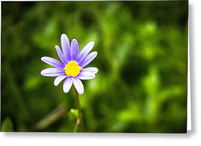 Photo Art Gallery Greeting Cards - Lonely Greeting Card by George Fivaz